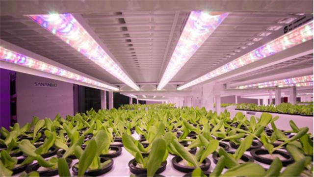 植物生长灯